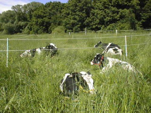 Die Muhs chillen_22.05.2008