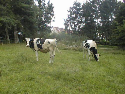 Die Jungs grasen_22.07.2008