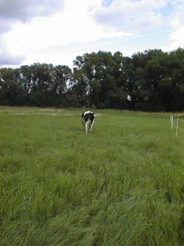 Dunja watschelt davon_22.07.2008