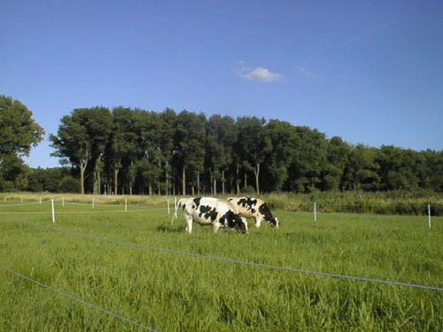 Frisches Gras_23.07.2008
