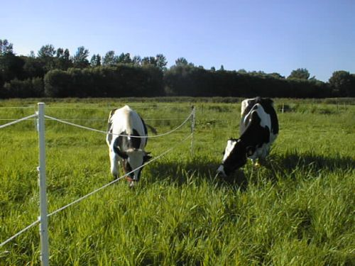 Mutter&Sohn_23.07.2008