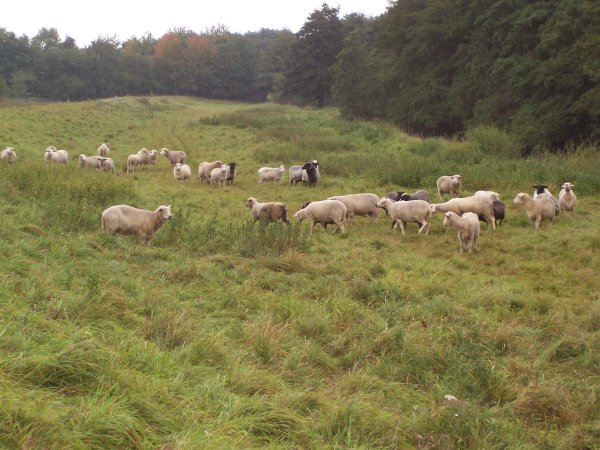 wolke-in-herde.jpg