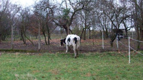 Amigo erkundet die neue, vergrößerte Winterwiese_23.11.2008