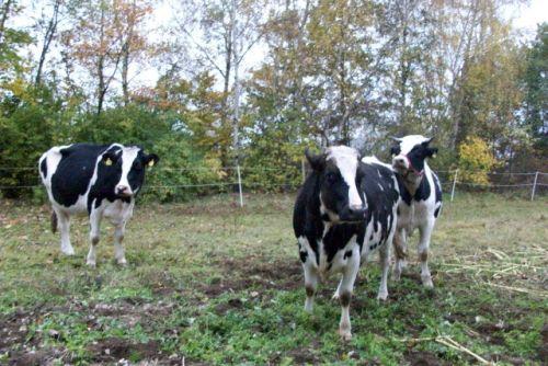 Anna,Dunja,Amigo_02.11.2008