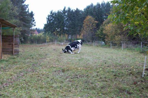 Dunja wühlt_02.11.2008