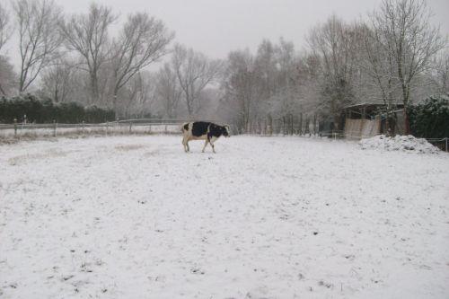 Anna im Schnee auf dem Weg zum Essen_02.01.2009