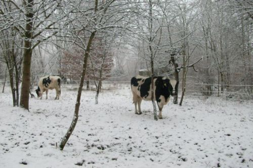 Dunja+Amigo im Schnee_02.01.2009