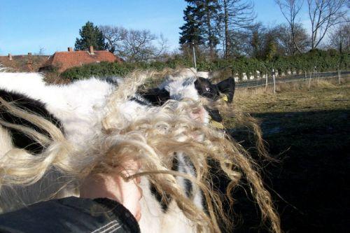 Milos lockiger Schwanz03_02.01.2009