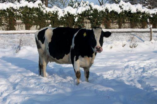 Anna im Schnee02_04.01.2010