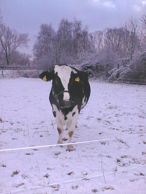 dunja_schnee_winter07-08.JPG
