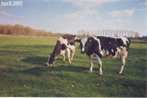 annadunja-erwachsen-wiese_april-2005.jpg