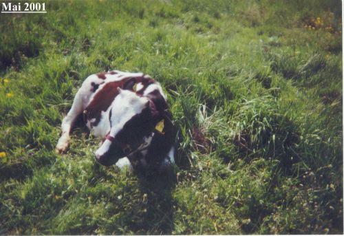 kalb-dunja-liegt-im-gras_mai-2001.jpg