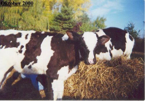 kalb-dunja_okt2000.jpg