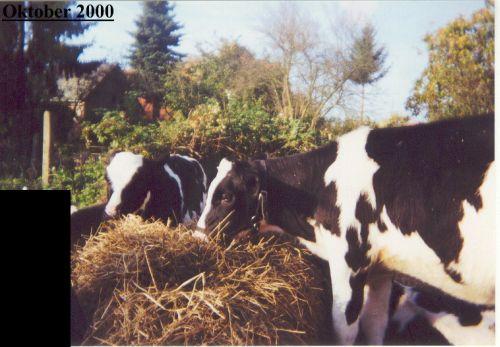 kalber-dunjaanna_okt2000.jpg