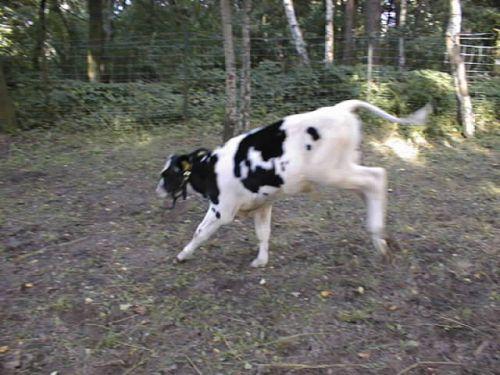 milo-macht-bocksprunge_04092007.JPG