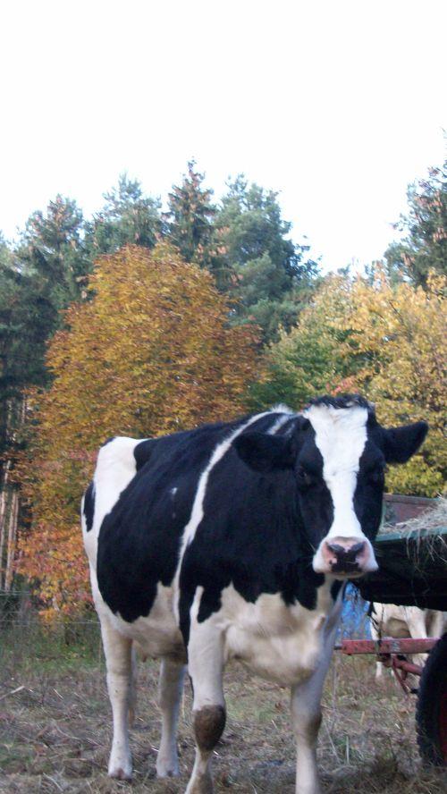 anna-herbstlich_30102011.JPG