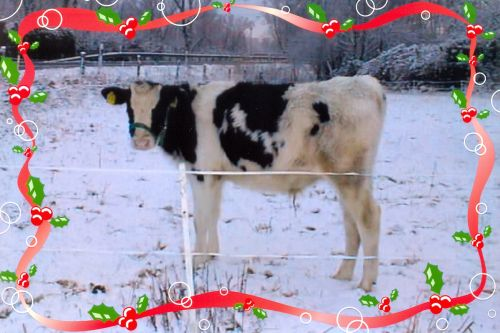 milo-weihnachtlich_2011-04.jpg