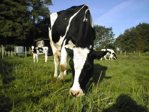 anna-grast-hinten-miloamigo_19092007.JPG