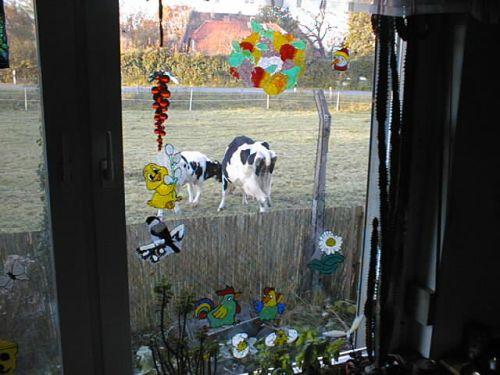 blick-aus-dem-kuchenfensteramigoanna_04112007.JPG