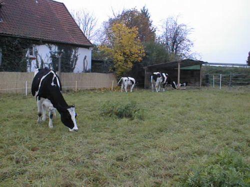 die-winterwiese-vorm-haus_29102007.JPG