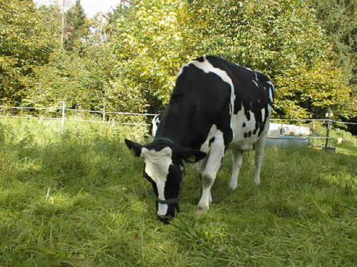 dunja-grast_06102007.JPG