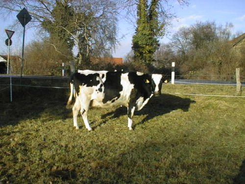 dunja_09122007.JPG