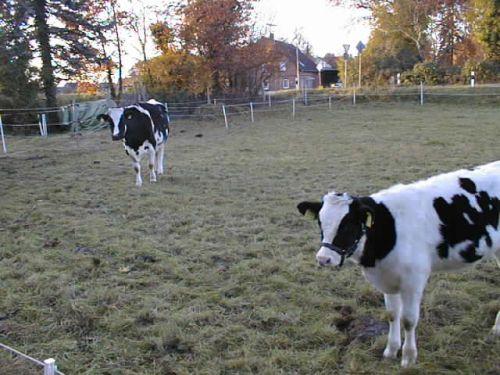 dunjaamig_04112007.JPG