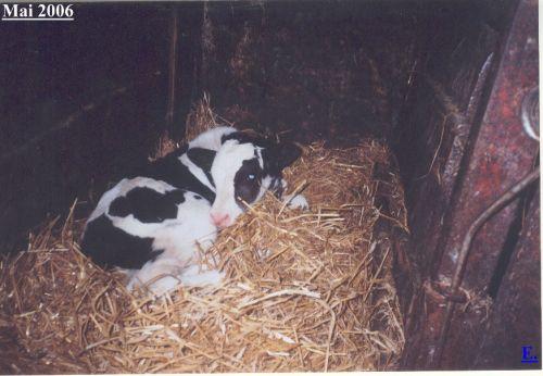 dunjas-kalbchen-diego03_mai-2006.jpg