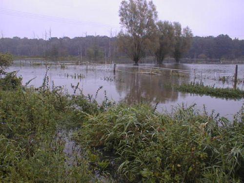 uberschwemmte-pachtwiesen_02102007.JPG