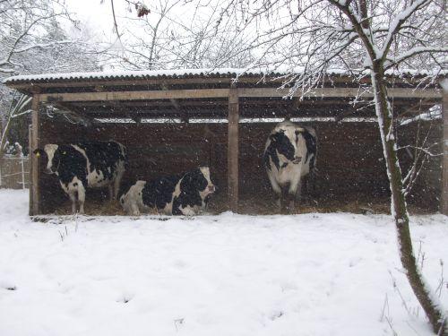 trio-im-unterstand_09122012.JPG