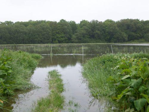 Überschwemmung02_27.05.2013