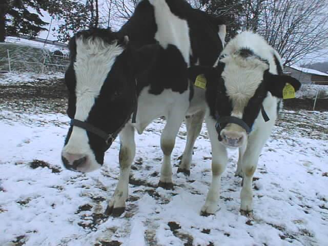 Anna&Amigo_02.01.2008