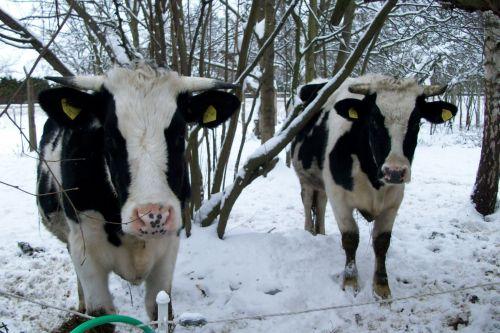 Die süßen Jungs_11.01.2010